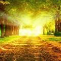 光射す街路樹 iPhone6壁紙
