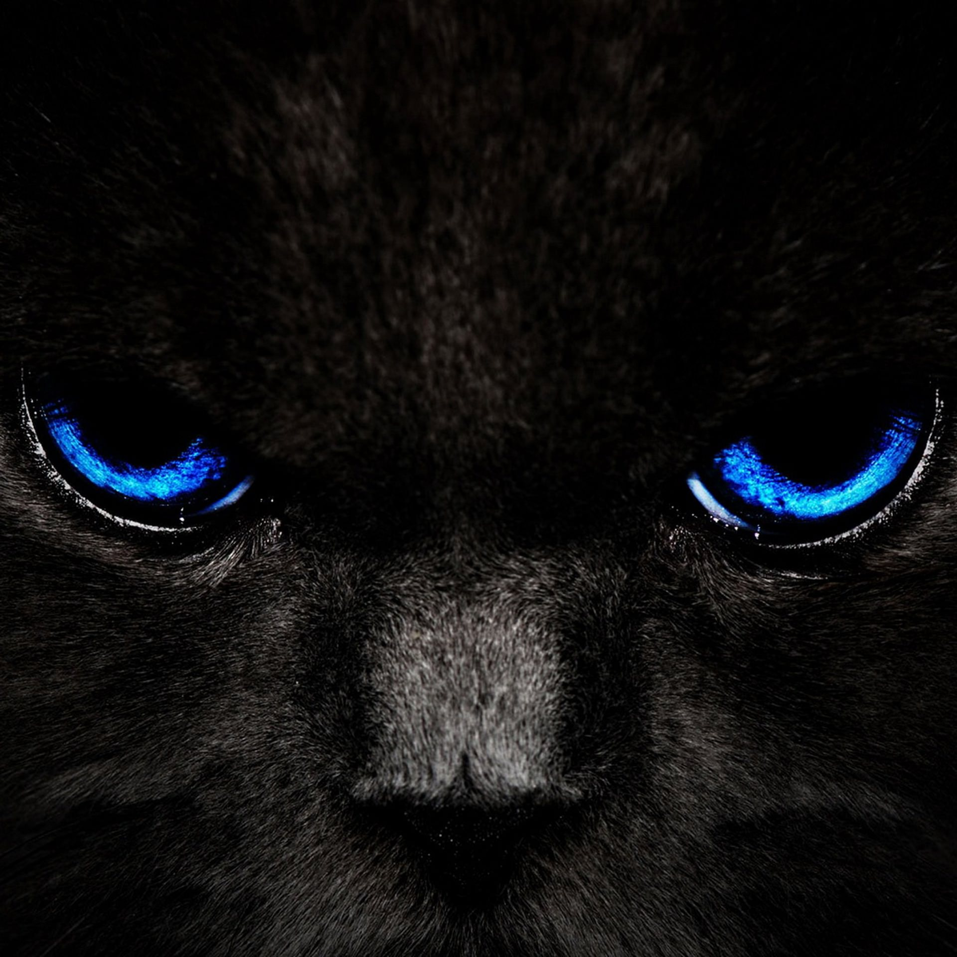 Black Cat Android壁紙