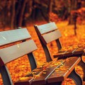 秋の公園のベンチ iPhone6壁紙