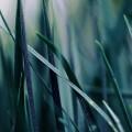 濃い緑の雑草 iPhone6壁紙