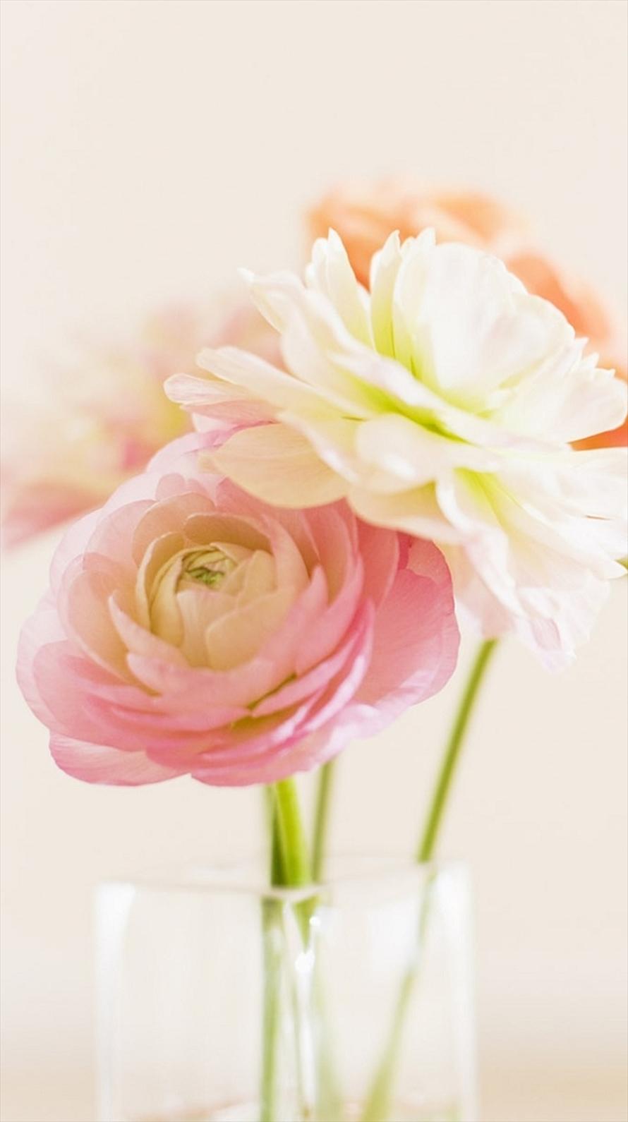 ピンクと白の花 Iphone6壁紙 Wallpaperbox