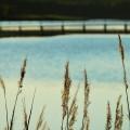 植物越しの湖 iPhone6壁紙