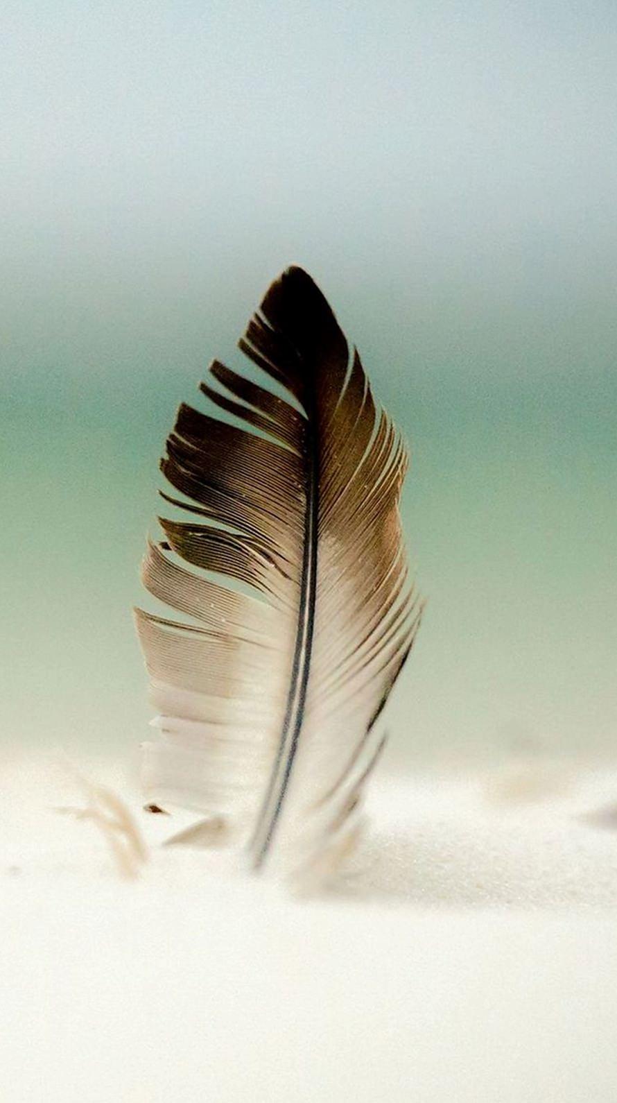 鳥の羽 グラデーション iPhone6壁紙